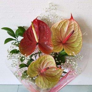 Bouquet De 3 Antúrios