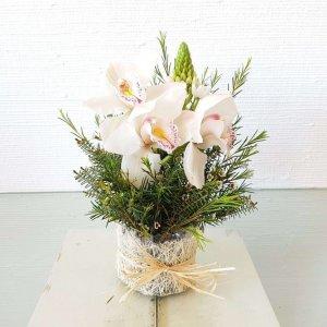 Centro De Beijinhos De Mãe E Orquídeas Branca