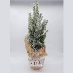 Pinheiro De Natal Com Vaso Em Lisboa