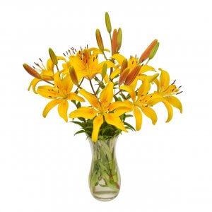 Flores Lirios